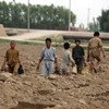 Child farmers help to level fields in Balkh Province, Afghanistan.