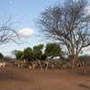 Cattle and donkeys near a water point in Kenya's Eastern Province. (file)