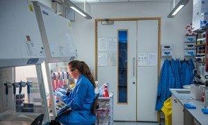 علماء  في جامعة أوكسفورد يحرزون تقدما في تطوير لقاح ضد فيروس كورونا.