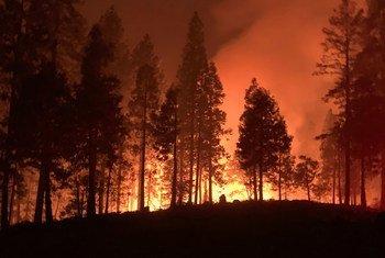 Fogo florestal na Califórnia em 2020. Depois de um incêndio, as encostas ficam vulneráveis à erosão, que impede a recuperação da floresta