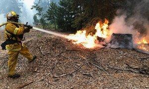 Los incendios forestales en las monatñas de California han provocado la pérdida de más de 78.000 acres de bosque.
