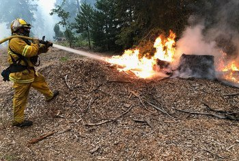 More than 78,000 acres of forest in the Sierra mountains in California has been lost due to wildfires.