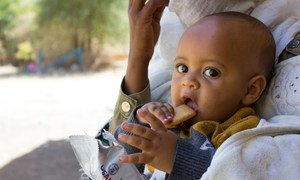 A seven-month-old baby displaced with his mother due to conflict in Tigray eats a high energy biscuit to boost his nutrition levels.