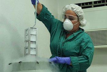 Cuba cuenta con décadas de experiencia e inversión en los sectores biotecnológico y farmacéutico.