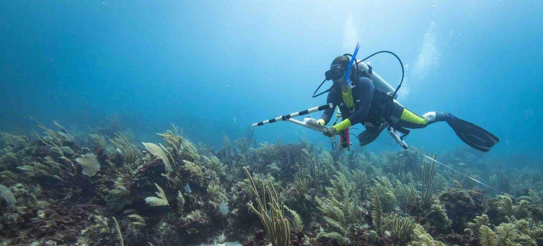 Un buzo monitorea el estado de los arrecifes en el caribe mexicano.