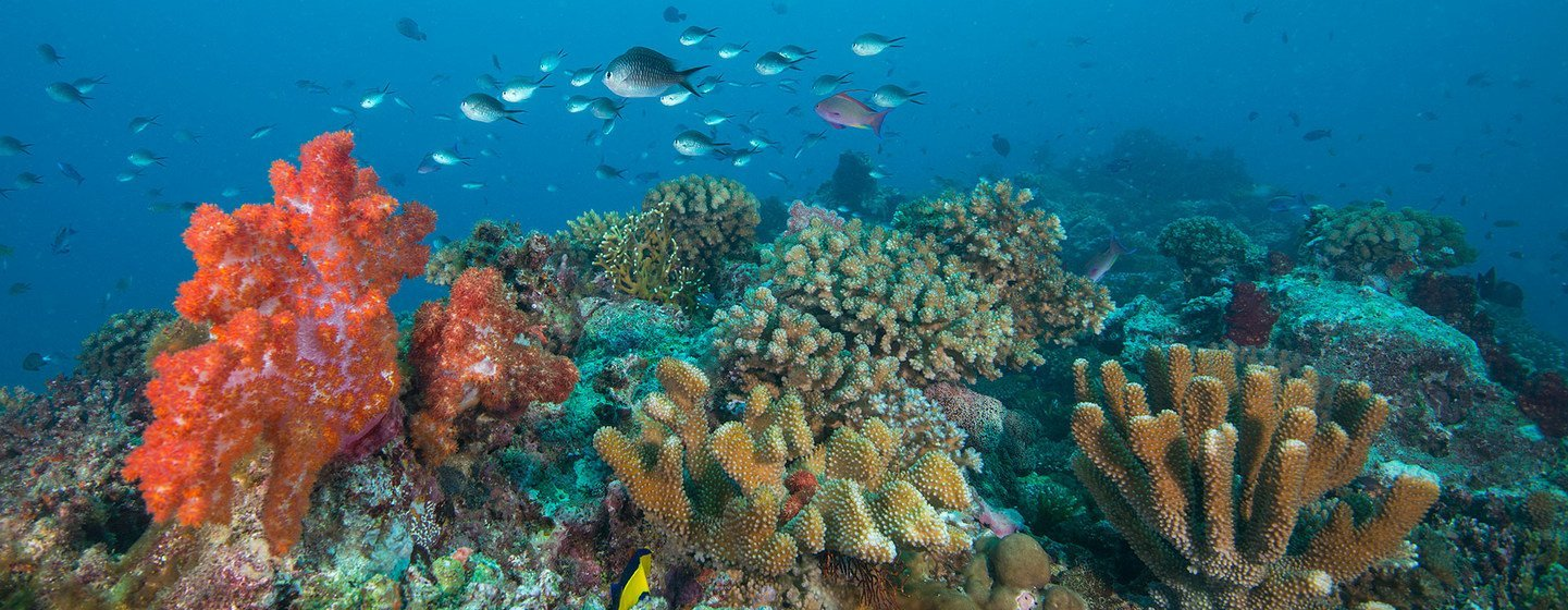 Coral reefs in Fiji are under threat due to global warming and other factors.