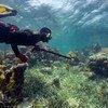 Les récifs coraliens sont durement affectés par le changement climatique.