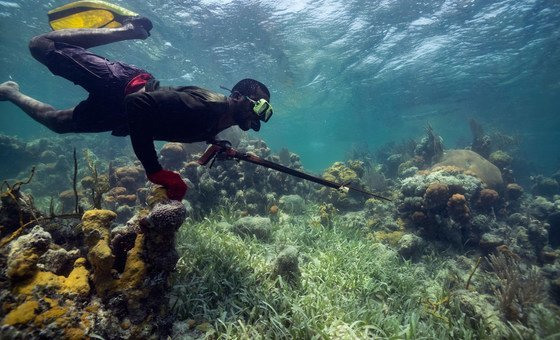 Coral reefs can support local jobs including fishing.