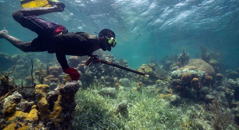 Cientistas vão colher amostras de espécies marinhas em projeto inédito da Unesco.