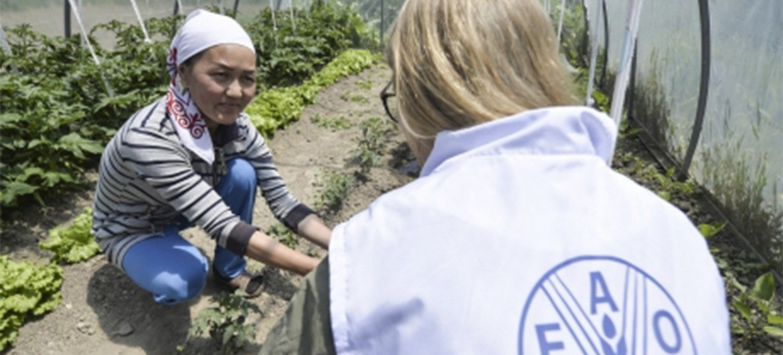 ФАО помогает фермерским хозяйствам в Кыргызстане