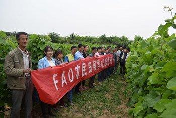 联合国粮农组织与中国政府相关部门合作开展的农民田间学校项目。