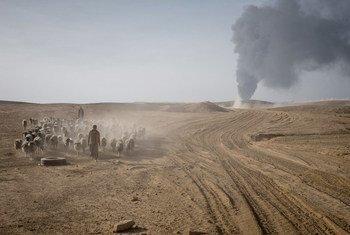 在伊拉克摩苏尔南部,一名牧民带领他的牲畜远离伊拉克军队和伊黎伊斯兰国之间的战斗。(档案照片)