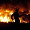 Угрозу для здоровья человека представляет дым, поскольку при горении растительности в воздух выделяются токсичные газы и твердые частицы.