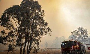Combate a incêndios florestais podem ser arma na luta contra ao clima