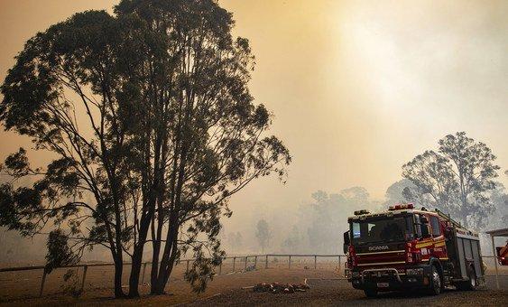 В Австралии одновременно бушуют десятки пожаров. Огонь стремительно охватывает новые лесные массивы