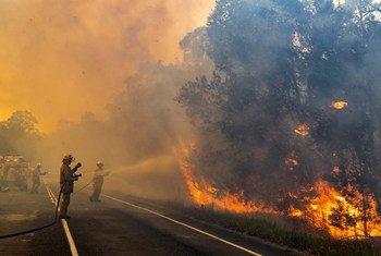 Relatórios da Austrália mostram que mais de 10 milhões de hectares, uma área do tamanho da Inglaterra, queimaram na segunda semana de janeiro,