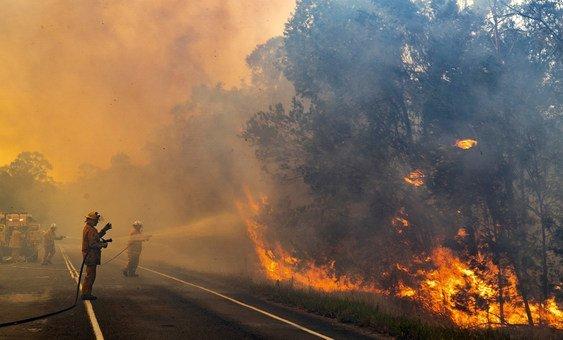 В Австралии бушуют пожары.  Огнем охвачены штаты Новый Южный Уэльс и Квинсленд