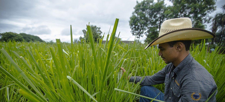 Cerrado brasileiro é considerado a área de maior potencial agrícola do mundo