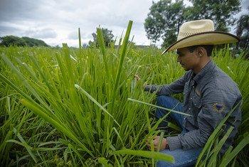 Relatório traz exemplos de iniciativas para reduzir as emissões de carbono da agricultura da América Latina e Caribe