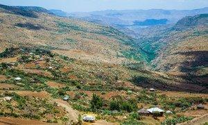 Боевые действия в регионе Тыграй в Эфиопии привели к многочисленным жертвам среди мирного населения.