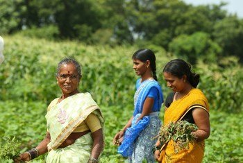 Disha Project supported by IKEA foundation to promote organic methods of cultivation as a means to economically empower women farmers.