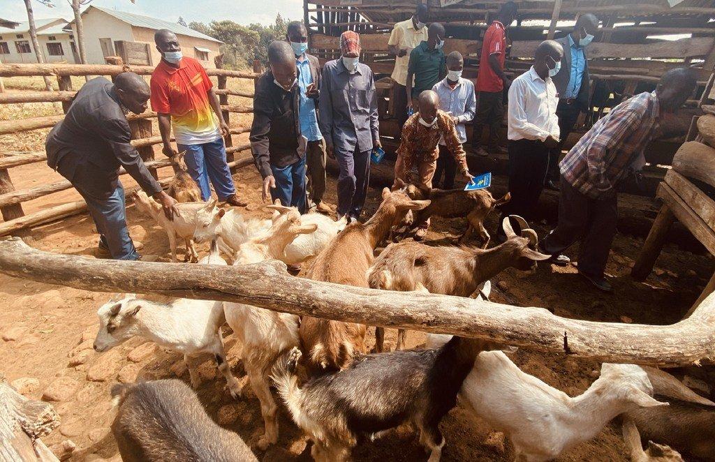 Wakulima kutoka mkoani Kigoma wakiwa kwenye ziara ya mafunzo ya kilimo bora na ufugaji mbuzi katika mkoa jirani wa Kagera nchini Tanzania, ziara iliyoandaliwa na FAO Tanzania.