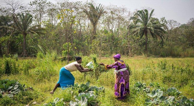 La FAO et Danone vont promouvoir des régimes et des systèmes alimentaires durables