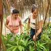 बोलीविया के उत्तरी अमेजॉन जंगलों में महिला वन संरक्षण कर्मचारी काम करते हुए.