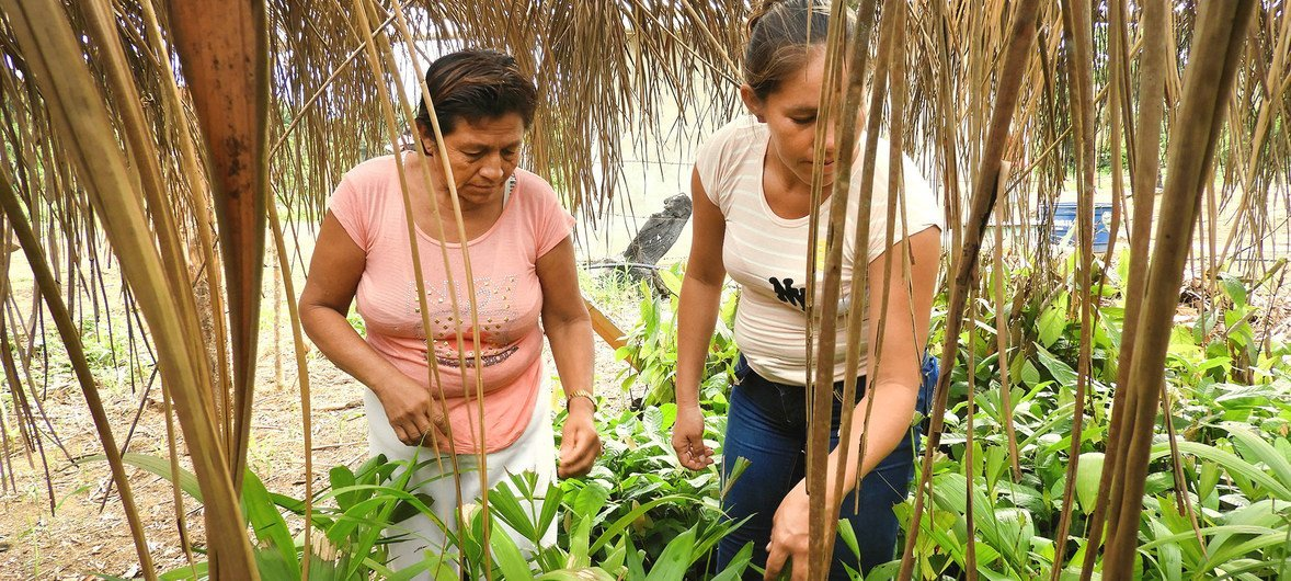 Women forest conservation workers in the northern Bolivian Amazon..