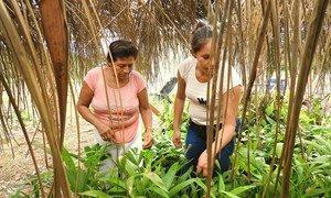 Mujeres rurales trabajando en Bolivia.