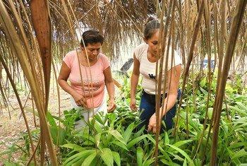 在北玻利维亚部从事亚马逊森林保护工作的妇女。