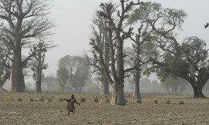 Uma criança corre em um campo em uma vila no estado de Katsina, no noroeste da Nigéria.