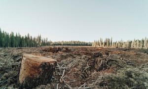 Deflorestação obriga muitos animais a abandonar seu habitat