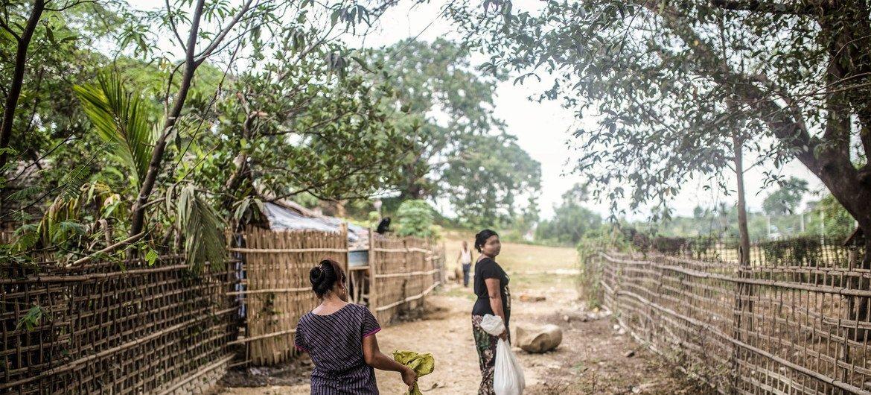 2016年4月,缅甸若开邦貌夺的养猪户。(资料图片)