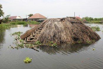 Maji katika ziwa Albert nchini Uganda yanazidi kuongezeka na kusababisha nyumba hasa katika wilaya ya Buliisa kutwama.