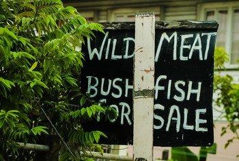 Потребление мяса диких животных чревато вспышкой опасных зоонозных заболеваний