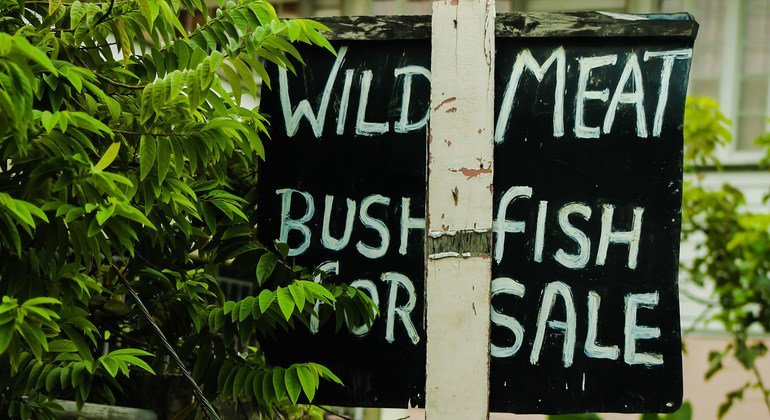 Wild meat is often a key use and a major driver for legal and illegal hunting,