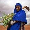 Une Somalienne déplacée élimine les mauvaises herbes dans une ferme en Somalie où des personnes déplacées plantent des tomates, des oignons et du maïs.