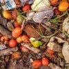 Le gaspillage de denrées alimentaires, ici au marché de Lira en Ouganda, est un défi important pour les agriculteurs et les vendeurs.