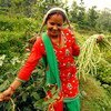 Rural women form a large proportion of the agricultural labour force in Nepal.