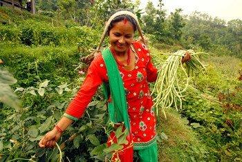 تمثل المرأة الريفية في النيبال الغالبية العظمى من القوى العاملة في البلاد.
