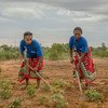 मेडागास्कर में कुछ महिलाएं सब्ज़ियों वाले खेत में काम करती हुईं. इनके खेतों को बहुत छोटे स्तर पर मुहैया कराई गई सिंचाई व्यवस्था से पानी मिलता है. इस परियोजना को विश्व खाद्य कार्यक्रम से सहायता मिलती है.
