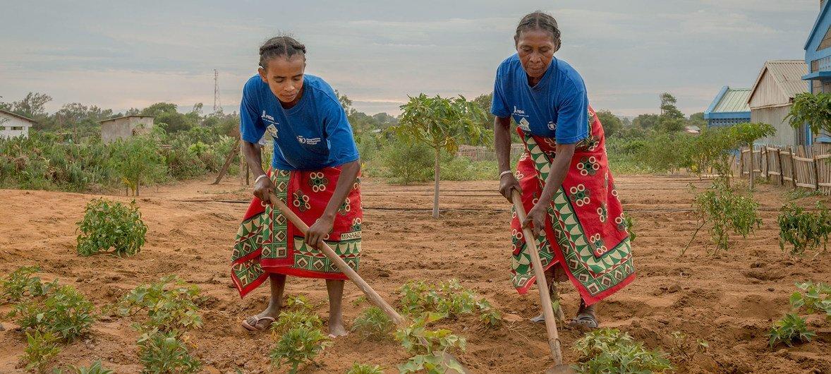 Mulheres cultivam a terra em Madagascar