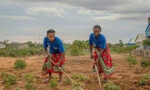 Women in Madagascar cultivate vegetables on land using a micro irrigation system, where the World Food Programme (WFP) is providing income generating opportunities to small-holder farmer organizations.