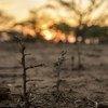 La sécheresse contribue à de graves crises alimentaires