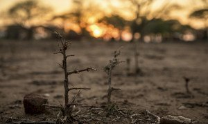 La sequía ha contribuido a la peor crisis alimentaria en más de una década en Zimbabwe