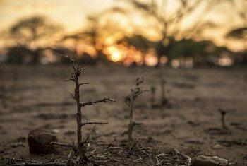 Au Zimbabwe, la sécheresse contribue à la plus grave crise alimentaire en plus de dix ans.