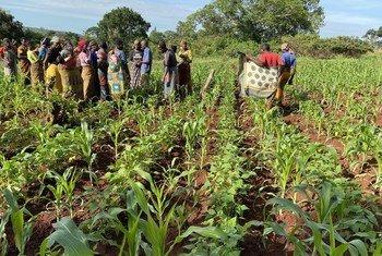 Wanawake wakulima wilayani Kakonko nchini Tanzania waliopokea mafunzo kuhusu mbinu za kukabiliana na mabadiliko ya tabianchi.