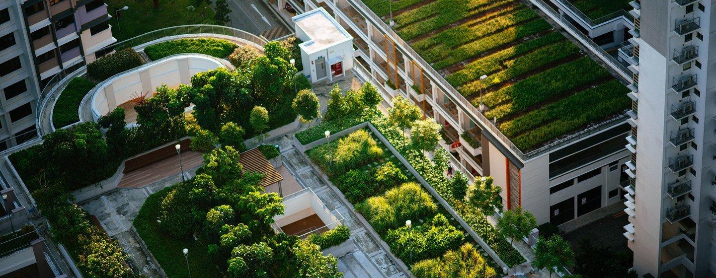 Новые зеленые города - путь к устойчивому будущему