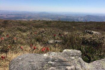O Cerrado brasileiro é uma das mais ricas do mundo em biodiversidade